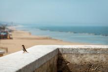 Sparrow On The Wall