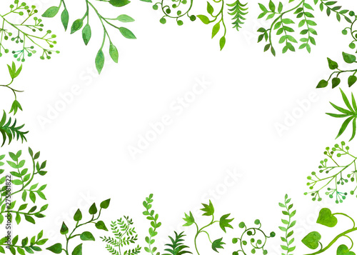 Fotografia, Obraz  bella cornice su sfondo bianco botanica