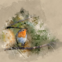 Digital Watercolor Painting Of Stunning Portrait Of European Robin Redbreast Erithacus Rubecula Sitting In Tree In Sunny Woodland Landscape