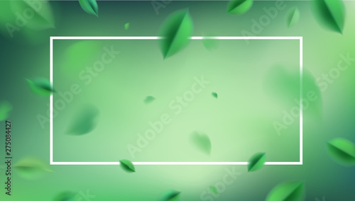 Obraz Green nature abstract background with flying spring leaves and white frame vector design - fototapety do salonu
