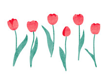Set Of Watercolor Tulip. Vector Illustration.