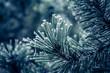 canvas print picture - Frostbedeckter Nadelbaum im Winter