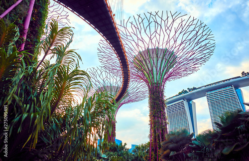 Obraz Gardens by the Bay  with Supertree in Singapore - fototapety do salonu