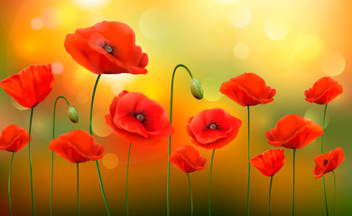 Fototapeta Maki Summer sunny landscape background with a red poppies. Vector.