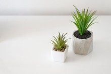 Plant In Pot Isolated