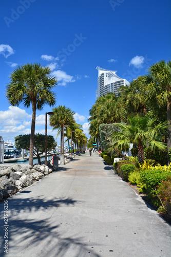 Promenade among palm trees along the marina in Miami Beach, Wallpaper Mural