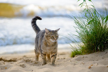 Cat On The Beach Near The Sea