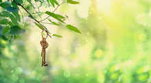 Vintage Gold Key In Forest Tree. Magical Composition With Beautiful Key In Nature, Concept Secret Garden, Summer Gentle Mystery Background. Banner For Website.  Copy Space