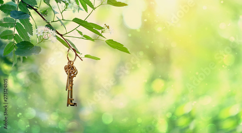 Fond de hotte en verre imprimé Jaune de seuffre vintage gold key in forest tree. magical composition with beautiful key in nature, concept secret garden, summer gentle mystery background. banner for website. copy space