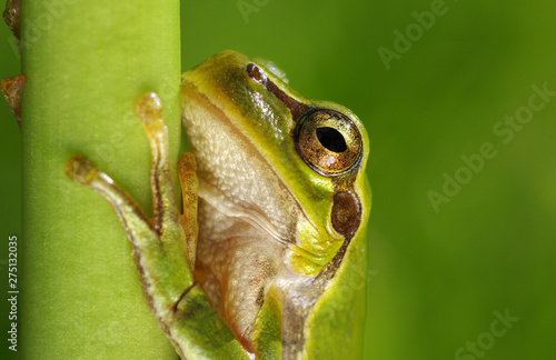 Photo Frog on green background