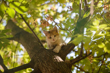The Kitten Can Not Climb Down From The Tree