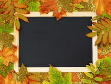 Colorful And Golden Autumn Leaves With A School Chalkboard