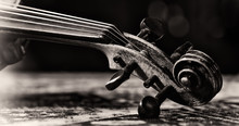 Detail Violin - Still Life ,monochrome Version, Due To The Character Contains Grain / Noise Ratio And Enhanced Details
