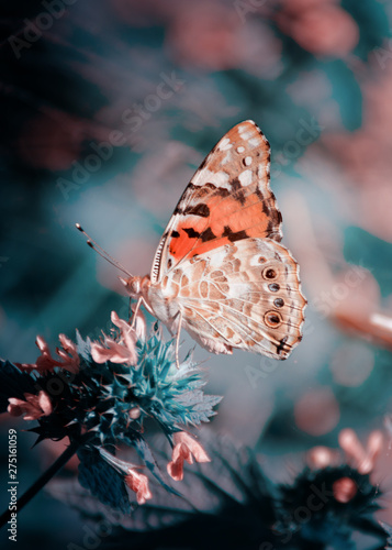 Fotografie, Obraz  Magic background with painted lady butterfly