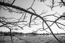 Árvores Preto E Branco Em Igu...