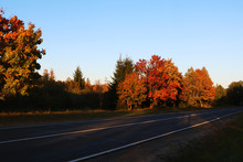 Bright Colorful Trees Along The Road In Autumn