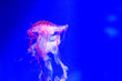 canvas print picture - Jellyfish underwater