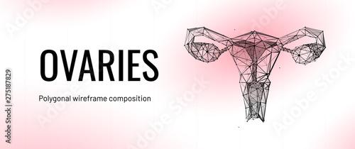 Fotografia, Obraz Female uterus and ovaries abstract scientific background, reproductive organs tr