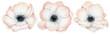 Leinwandbild Motiv Watercolor anemone rose flowers illustration isolated on the white background