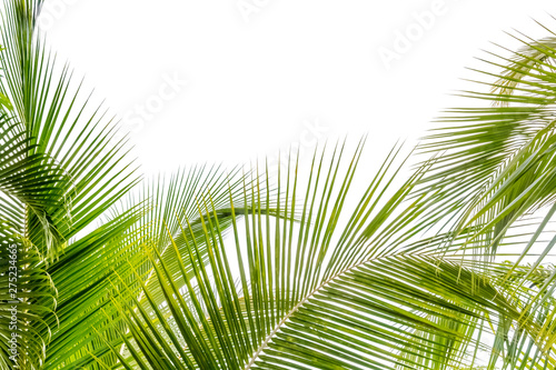 Palmier palm leaves on blue sky background