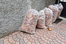 Fallen Leaves Packed In Plastic Bags For Transportation And Utilization Future. Collecting Autumn Leave Is Seasonal Work In Autumn Garden Concept