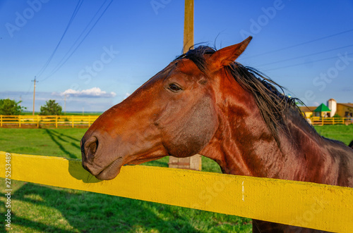 Horse red suit in the pen on the pasture on the background green grass blue sky