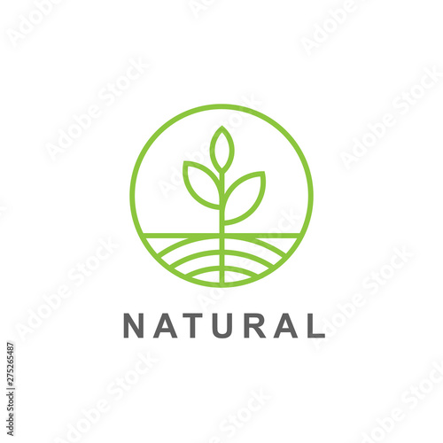 Foto Green leaves and root sprout  logo vector illustration