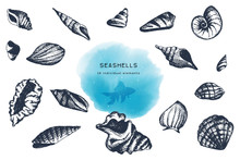 Seashells Collection. Hand Drawn Elements Set Of Various Sea Shells On White Background