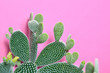 canvas print picture Cactus Green colored on Purple background. Fashion, minimalism. Contemporary Art gallery Style. Creative concept. Trendy tropical fashionable plant, pastel color. Surrealism