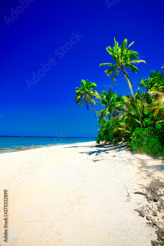 Spoed Fotobehang Eiland tropical beach with palm trees