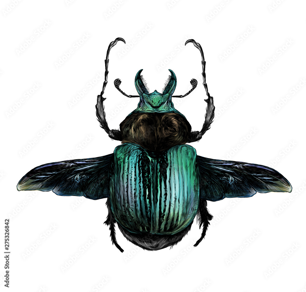 Fototapety, obrazy: may bug scarab with wings top view, sketch vector graphic color illustration on white background