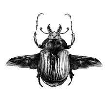 May Bug Scarab With Wings Top ...