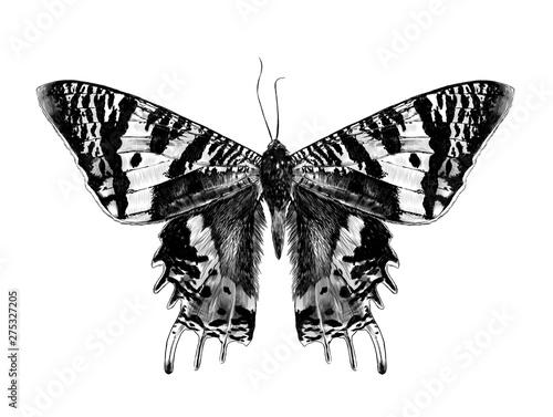 Obraz na plátně  Urania Malagasy butterfly with open wings symmetrically, sketch vector graphic s