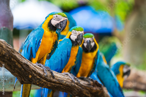 Poster Perroquets Group of colorful macaw on tree branches