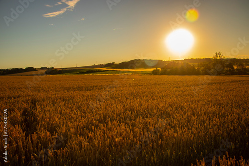 The filed of oat on the countryside near Domazlice Canvas Print