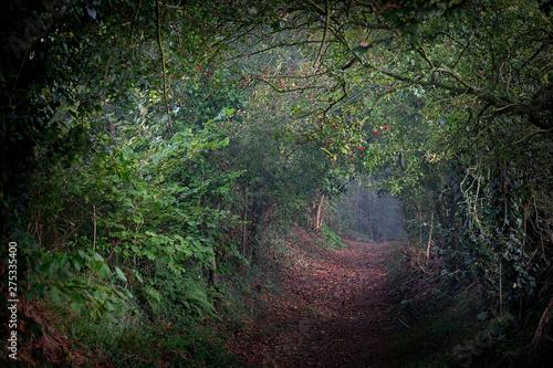 Spoed Fotobehang Weg in bos sentier bocager lumineux