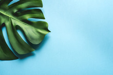 Monstera Leaf On A Blue Background. Flat Lay, Top View. Place For Your Text.