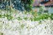 Leinwandbild Motiv field with dandelions with a shallow depth of field