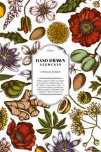 Card Design With Colored Almond, Dandelion, Ginger, Poppy Flower, Passion Flower, Tilia Cordata