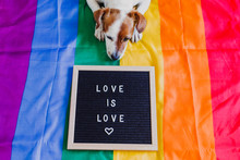 Cute Dog Jack Russell Sitting On Rainbow LGBT Flag In Bedroom. Letter Board Besides With Message LOVE IS LOVE.Pride Month Celebrate And World Peace Concept