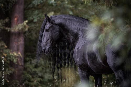 Beautiful friesian stallion posing in the forest Fototapete