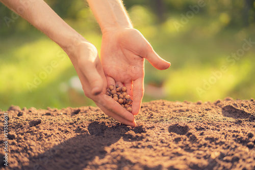 dirty farmer hand puts a plant seed in the hole in the soil