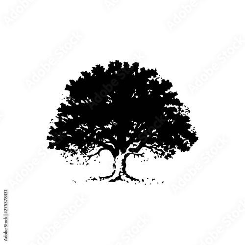 Cuadros en Lienzo OAK TREE