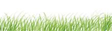 芝生 水彩イラスト