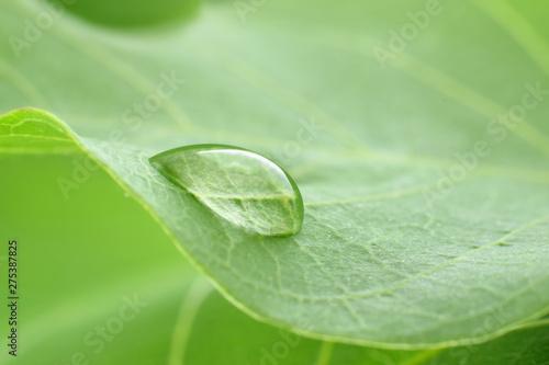 Poster Vegetal water drop