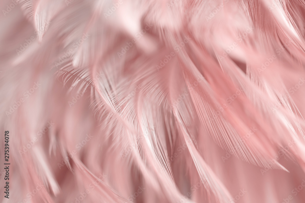 Fototapety, obrazy: Blur Bird chickens feather texture for background, Fantasy, Abstract, soft color of art design.