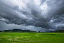 Rain Clouds Over Rice Field