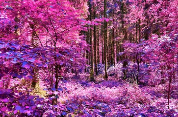 FototapetaBeautiful infrared view into a purple fantasy forest
