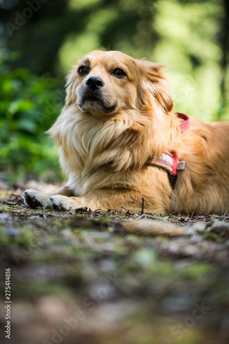 Fototapeten Natur trauer Hund