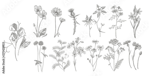 Fototapeta Collection of hand drawn flowers and herbs. Botanical plant illustration. Vintage medicinal herbs sketch set of ink hand drawn medical herbs and plants sketch. obraz na płótnie